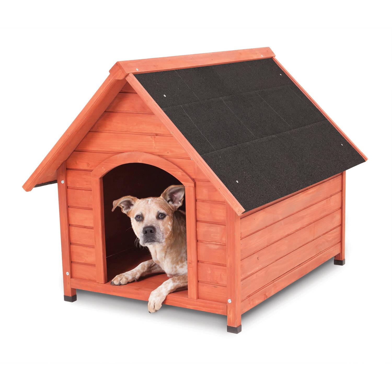 D Dog House
