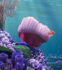 Findet Nemo Seestern