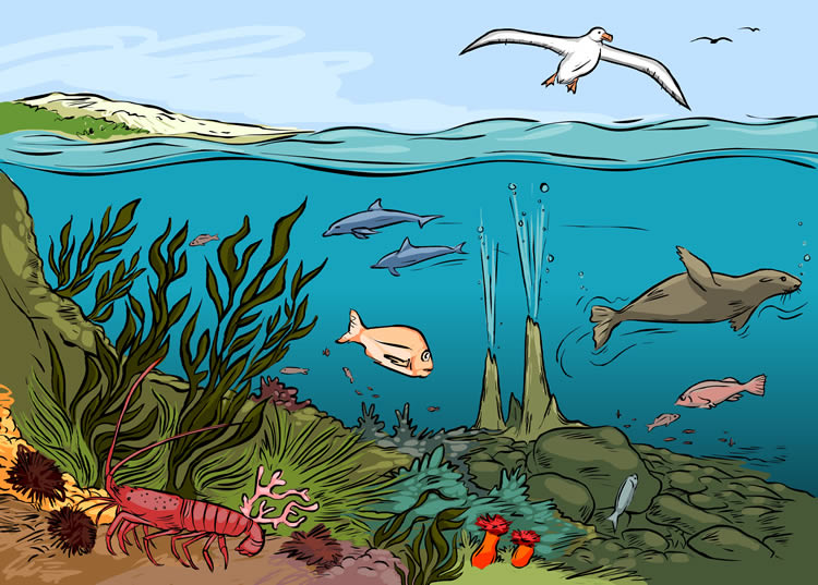 Where both living and nonliving things interact