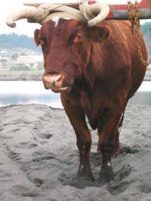 Quia - Els animals de granja