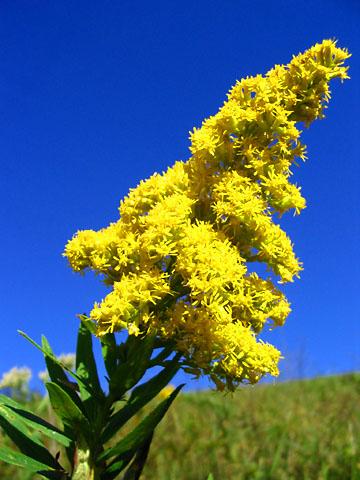 Quia - Envirothon Plant Identification