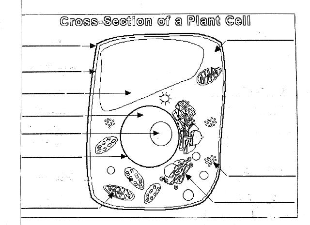 November 2016 – Comparing Plant and Animal Cells Worksheet