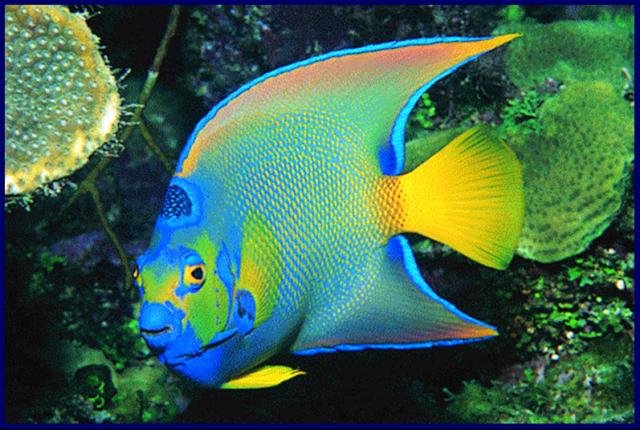 Quia - Fish Identification