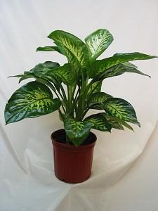Quia House Plants 12