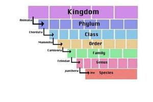 Classification worksheet matching binomial nomenclature