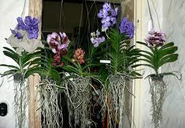 Quia Plants Vocab 2