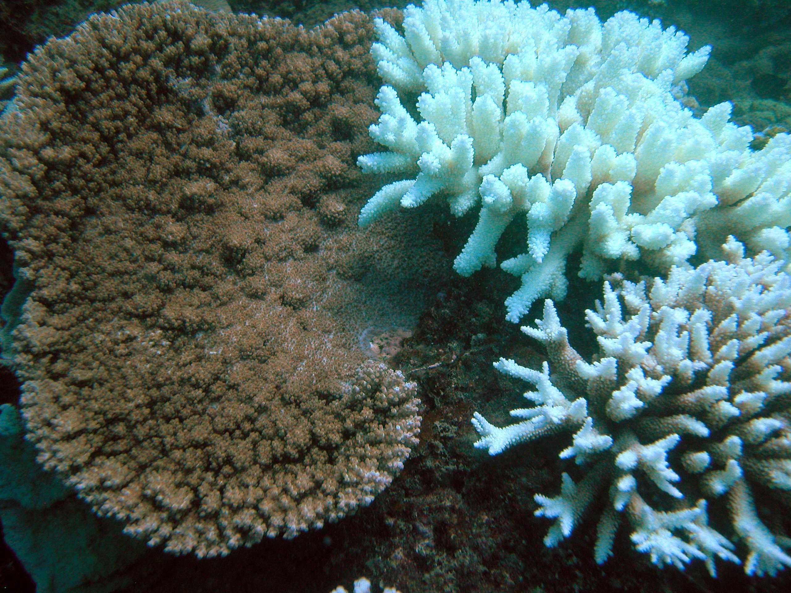symbiotic relationship of coral and algae
