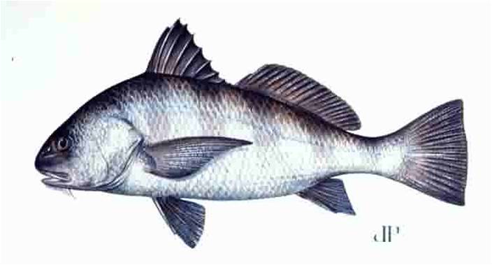 Quia Ch 00 Marine Fish Identification Lab Scientific