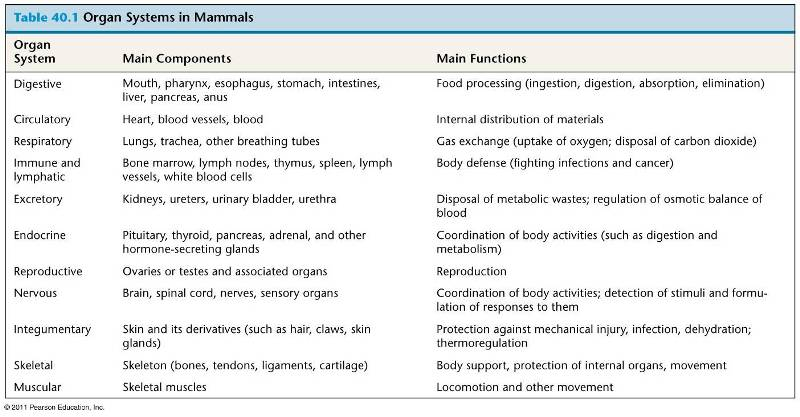 digestive system of mammals How fast does it take for food to travel through the digestive system  among  mammals, the small carnivores win the digestion race and large.