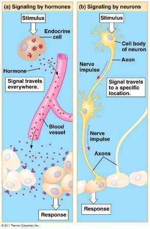 611342 also Creating Health 4 Gastrointestinal Balance as well Fotograf C3 ADa De Archivo Ser Humano Del Est C3 B3mago Seccionado Transversalmente Image22517042 as well Gut 2 moreover 55057. on tissue digestion