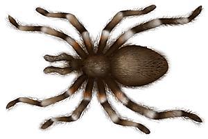 Arachnid Unit Study Quia - Unit 4: ...
