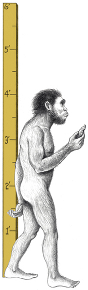 early hominids and tools A hominid is any member of the biological family hominidae  later, hunting and social needs led to larger brains brains and the making and use of tools.