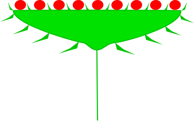 Matching Images >> Quia - Chapter 3: Leaf Arrangements & Inflorescence Types