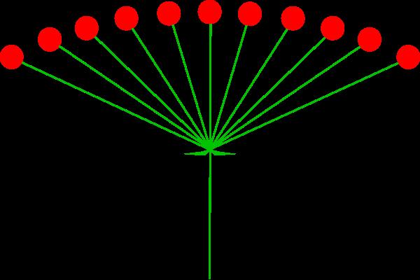 Quia - Chapter 3: Leaf Arrangements & Inflorescence Types