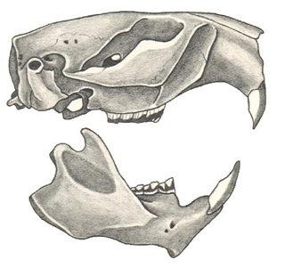 Quia - Animal Tracks and Skulls