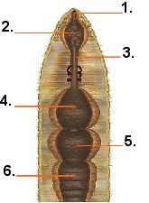 Quia earthworm parts quiz earthworm parts quiz ccuart Images