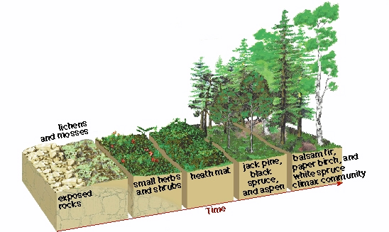 Quia - Primary and Secondary Succession