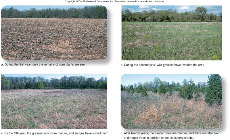ss_4_shots_of_field quia primary and secondary succession