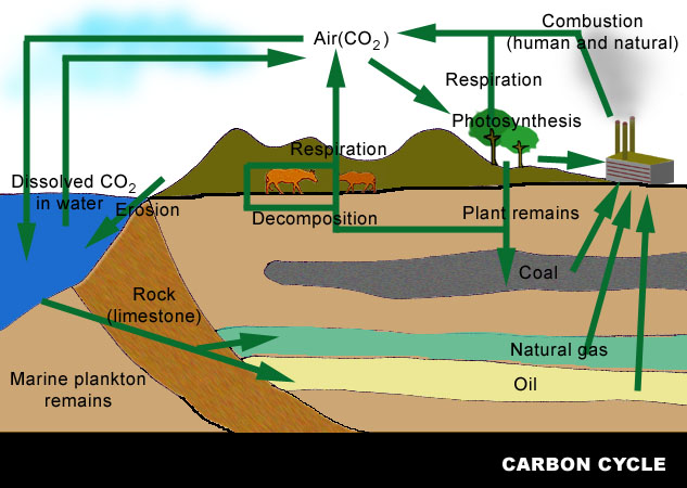 Carbon Cycle Combustion