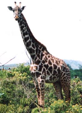 dschungel tiere dreizehn hintergrundbilder - photo #43