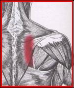 Quia Trigger Point Pain Referral Review Game