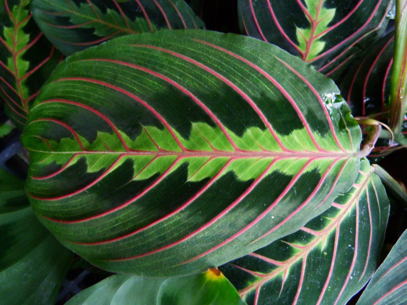Зеленые цветы уход в домашних условиях фото